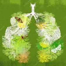 Spis dig til et sundere åndedræt